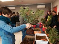 Corso base Rinvaso pre-bonsai