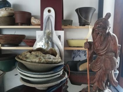 Pianura Bonsai Studio